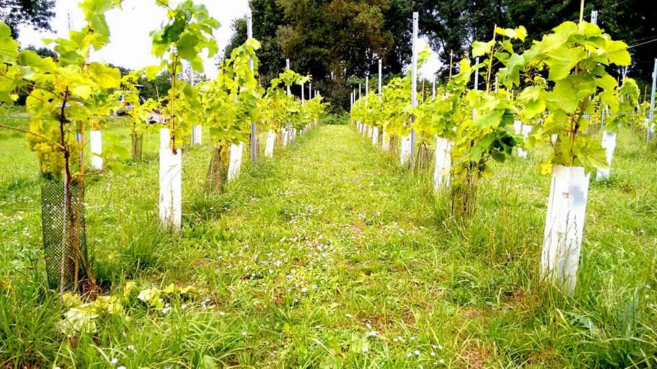 Ontdek onze wijngaard